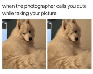 https://t.co/vy6sKdwBz1: when the photographer calls you cute  while taking your picture https://t.co/vy6sKdwBz1
