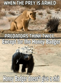 WHEN THE PREY IS ARMED  PREDATORS THINK TWICE  Except for the Honey Badger  Owen Slater Photograph I don't care if it's Whitaker or someone else. The ONLY thing I care about is that our next confirmed AG is a complete HONEY BADGER. Nothing less.