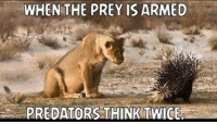 Does the porcupine need more than 10 quills to repel a lion attack? -- Cold Dead Hands Apparel: CDH2A.COM/shop: WHEN THE PREY IS ARMED  PREDATORS THINKTWICE Does the porcupine need more than 10 quills to repel a lion attack? -- Cold Dead Hands Apparel: CDH2A.COM/shop