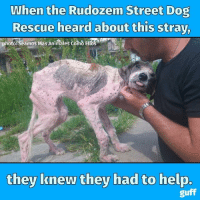 Animals, Anime, and Dank: When the Rudozem Street Dog  Rescue heard about this stray,  photo: Seamos Mas Animales como Eltos  they knew they had to help.  guff When an animal rescue team found this dog, they knew they needed to help. Share if you love rescues!