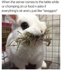 """Food, Memes, and Asks: When the server comes to the table while  ur chomping on ur food n asks if  everything's ok and u just like """"isssggoo'"""" They always do this 😂"""