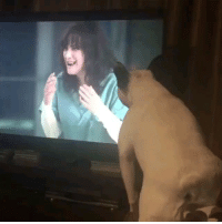 9gag, Life, and Memes: When the show is too intense and you get a bald spot - - 📷 @life_as_a_lemon - - 9gag bulldog frenchie strangerthings