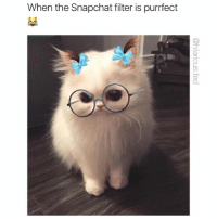 Funny, Goals, and Snapchat: When the Snapchat filter is purrfect  CD Snapchat goals (@hilarious.ted)
