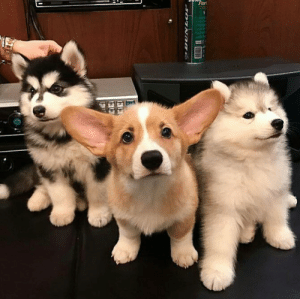 Af, Cute, and Squad: When the squad shows up looking cute af.
