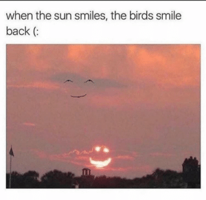 Me irl: when the sun smiles, the birds smile  back ( Me irl