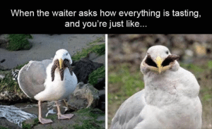 Click, Internet, and Lmao: When the waiter asks how everything is tasting,  and you're just like... 30 Funniest Memes on the Internet CLICK PIC FOR MORE LAUGHS!! 🤣 #boredomkills #memes #lmao #hilarious #instacomedy #funnyposts #lmfao #rofl #lolz #meme #lol #laughing #relatable #cohmedy #lols