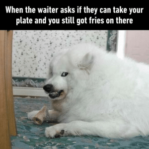 Dank, Asks, and 🤖: When the waiter asks if they can take your  plate and you still got fries on there I'm gonna bite your damn hand