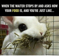 Animals, Food, and Memes: WHEN THE WAITER STOPS BY AND ASKS HOW  YOUR FOOD IS, AND YOU'RE JUST LIKE... 15 Times Animals Ate In Restaurants And Had To Deal With The Waiters (Memes)