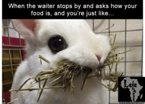 19 Funny Rabbit Meme That Make You Laugh | MemesBoy: When the waiter stops by and asks how your  food is, and you're just like...  Leke  www.lekemicmesco 19 Funny Rabbit Meme That Make You Laugh | MemesBoy