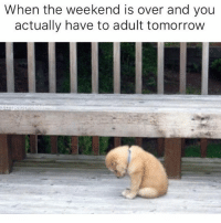 Fuck being a grown-up: When the weekend is over and you  actually have to adult tomorrow  @bigkieprobte Fuck being a grown-up