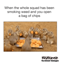 Friday, Lol, and Smoking: When the whole squad has been  smoking weed and you open  a bag of chips  The Intemet Scavengers <p>LOL picture collection  Your Friday funnies are here  PMSLweb </p>