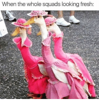 Fresh, Squad, and Girl Memes: When the whole squads looking fresh: We're here and we're ready to partyyyyyyy