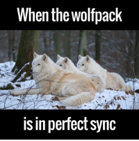 Dank, 🤖, and Via: When the Wolfpack  is in perfect sync A wolfpack fully in sync. This is glorious.  via ViralHog