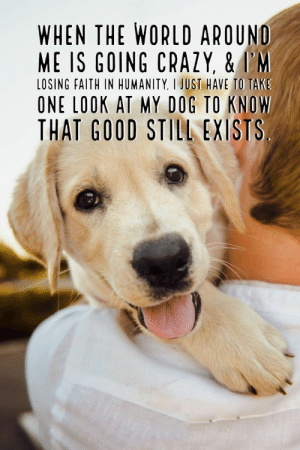 65 Best Funny Quotes Life And Funny Sayings 64: WHEN THE WORLD AROUND  ME IS GOING CRAZY, &I'M  LOSING FAITH IN HUMANITY, I JUST HAVE TO TAK  ONE LOOK AT MY DOG TO KNOW  THAT GOOD STILL EXISTS 65 Best Funny Quotes Life And Funny Sayings 64