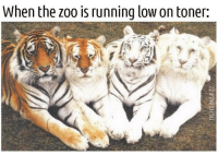 Memes, Help, and Running: When the zoo is running low on toner: <p>I blame the Zebras. All those stripes waste so much ink. </p><p><b><i>You need your required daily intake of memes! Follow <a>@nochillmemes</a>​ for help now!</i></b><br/></p>