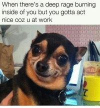 "Memes, Control, and Work: When there's a deep rage burning  inside of you but you gotta adt  nice coz u at work Tag someone trying to control their ""hood side"".. @animalsmeettheinternet for more @animalsmeettheinternet @animalsmeettheinternet"