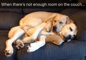 Animals, Memes, and Couch: When there's not enough room on the couch... Dog Memes Of The Day 32 Pics – Ep51 #animalmemes #dogmemes #memes - Lovely Animals World