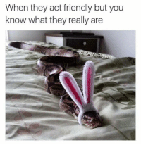 Act, They, and You: When they act friendly but you  know what they really are