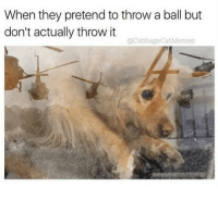 Dank Memes, Why, and They: When they pretend to throw a ball but  don't actually throw it  @CabbageCatMemes why are u like this