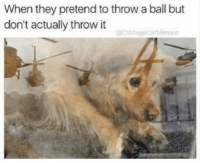 Dogs, Pretenders, and They: When they pretend to throw a ball but  don't actually throw it  Memea