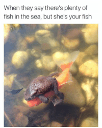 Fish, Plenty of Fish, and They: When they say there's plenty of  fish in the sea, but she's your fish