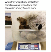 SarcasmOnly: When they weigh baby koalas they  sometimes do it with a toy to stop  separation anxiety from its mom  Wedderbum  132  MODE  ZERO SarcasmOnly