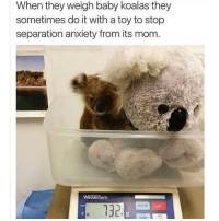 Follow my other account @x__social_butterfly__x for more cute pics ❤: When they weigh baby koalas they  sometimes do it with a toy to stop  separation anxiety from its mom  051  132 Follow my other account @x__social_butterfly__x for more cute pics ❤
