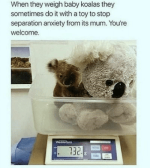 Have some faith in humanity, people! These animal stories will put an instant smile on your face, even if it's just for a few minutes.#wholesome #wholesomememes #animalmemes #cuteanimals #funnymemes #catmemes #dogmemes #faithinhumanity: When they weigh baby koalas they  sometimes do it with a toy to stop  separation anxiety from its mum. You're  welcome.  Wedserbun  732 Have some faith in humanity, people! These animal stories will put an instant smile on your face, even if it's just for a few minutes.#wholesome #wholesomememes #animalmemes #cuteanimals #funnymemes #catmemes #dogmemes #faithinhumanity