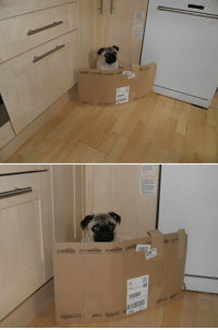 Jail, Memes, and 🤖: When this pug was imprisoned in kitchen cardboard jail...