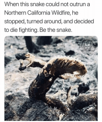 Memes, True, and California: When this snake could not outrun a  Northern California Wildfire, he  stopped, turned around, and decided  to die fighting. Be the snake  GAME True Story coming from the Nor-Cal wildfires. Be the snake. When you know shits going sour, fight. To the death. DontTreadOnMe 🐍