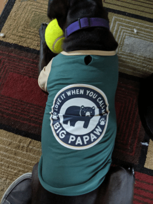 Cats, Food, and Love: WHEN TOU CALL  PAPAN  LOVE IT  BIG My tenant went to Petco to get food for her cats and came back with a shirt for my dog.