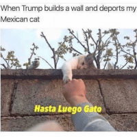 Damn bye Firulais 🐈 Follow @puro_jajaja mexicanproblems latinosbelike mamadas: When Trump builds a wall and deports my  Mexican cat  Hasta Luego Gato Damn bye Firulais 🐈 Follow @puro_jajaja mexicanproblems latinosbelike mamadas