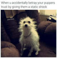 I can't believe you've done this: When u accidentally betray your puppers  trust by giving them a static shock  athe dank I can't believe you've done this