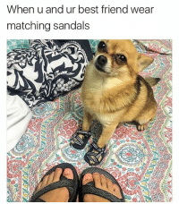 Cute Animals, Memes, and Sandals: When u and ur best friend wear  matching sandals @v.cute.animals is a must follow