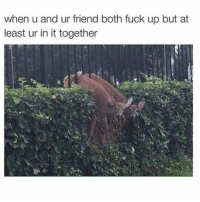 😂😂😂: when u and ur friend both fuck up but at  least ur in it together 😂😂😂