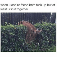 Dumb, Friends, and Fucking: when u and ur friend both fuck up but at  least ur in it together Good friends bail you out of jail while BFF's know it's a fucking dumb idea but grab that shovel and end up sitting next to you in jail while laughing about what idiots you two are. TotallyAMetaphorTho DontGoKillAnyone EatASnickersInstead YoureProbablyJustHungry