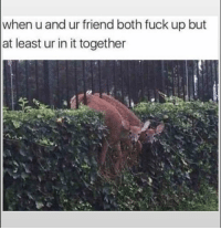 Funny, Lol, and Fuck: when u and ur friend both fuck up but  at least ur in it together Tag this loyal friend lol