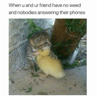 Funny, Memes, and Weed: When u and ur friend have no weed  and nobodies answering their phones Follow @toptree for daily funny memes