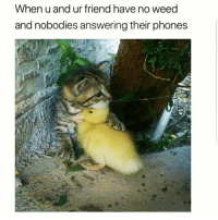 Latinos, Memes, and Weed: When u and ur friend have no weed  and nobodies answering their phones Awww 😊😊😊😂😂 🔥 Follow Us 👉 @latinoswithattitude 🔥 latinosbelike latinasbelike latinoproblems mexicansbelike mexican mexicanproblems hispanicsbelike hispanic hispanicproblems latina latinas latino latinos hispanicsbelike