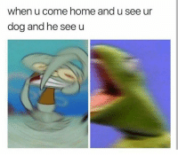 "Dogs, Love, and Home: when u come home and u see ur  dog and he see u <p>I love dogs via /r/wholesomememes <a href=""http://ift.tt/2maT1Gz"">http://ift.tt/2maT1Gz</a></p>"