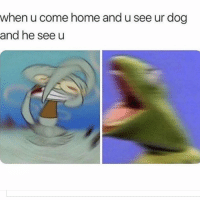 Memes, Home, and Mail: when u come home and u see ur dog  and he see u *When I go outside and come back in after checking the mail. Follow @doggosdoingthings for hilarious doggos.
