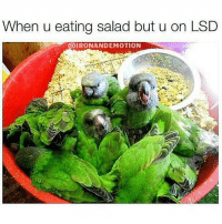 Gym, Lsd, and Ons: When u eating salad but u on LSD  IRONANDEMOTION This isn't what I ordered.