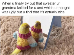 Wholesome_Birb: When u finally try out that sweater ur  grandma knitted for u and which u thought  was ugly but u find that it's actually nice Wholesome_Birb