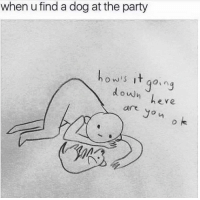 Party, Dog, and Down: when u find a dog at the party  hows itqig  in3  down  here  are