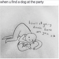 Dogs, Party, and Yo: when u find a dog at the party  ow t go,n  doun  ere  are yo n Dogs humans