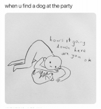 Memes, Party, and Puppies: when u find a dog at the party  ow's if gonq  he ve  are yon o k follow @iamathicchotdog for memes and puppies!