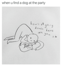Party, Dog, and Down: when u find a dog at the party  ow's it go,  ng  down  ere  are