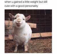 Cute, Good, and Via: when u gained a little weight but still  cute with a good personality A lil Chunky via /r/wholesomememes https://ift.tt/2R7gtli