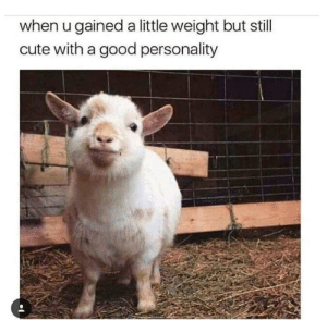 Cute, Good, and Guess: when u gained a little weight but still  cute with a good personality i guess this is wholesome right ? :v