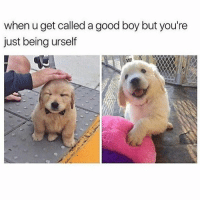 Follow me @antisocialtv @lola_the_ladypug @x__social_butterfly__x @x__antisocial_butterfly__x: when u get called a good boy but you're  just being urself Follow me @antisocialtv @lola_the_ladypug @x__social_butterfly__x @x__antisocial_butterfly__x
